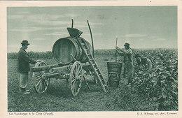 Le Vendange à La Côte (Vaud) - 1929     (P-44-50211) - VD Vaud