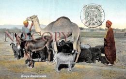 Egypte - Groupe Des Animeaux - âne Chameau - Altri