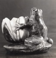 Etude Photographique Grenouillet Et Nenuphar Mrs William Wheeler Lexington KY Ancienne Photo 1940 - Photographs