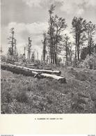 1948 - Héliogravure - Bellefosse (Bas-Rhin) - Une Clairière Du Champ Du Feu - FRANCO DE PORT - Old Paper