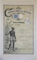 Share - Comp. Agricola Do Moribane - Título De Fundador 1900 - Magazines: Subscriptions