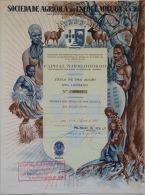 Share - Soc. Agrícola Do Encoge-Miguia, SARL 1.000$00 1955 - Magazines: Subscriptions