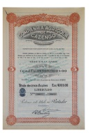Share - Companhia Agricola De Cazengo - 450$00 1929 - Magazines: Subscriptions