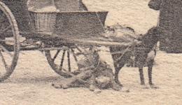 Turnhout - Marché Aux Légumes (pomp, Top Animation, Attelage Chiens, Nels, 1904) - Turnhout