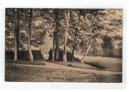Westerloo - Paysage Landschap - Westerlo