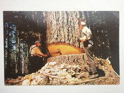 Postcard Caution Muscles At Work Under Cut Tree Log Logging In Washington & Oregon  My Ref B11260 - Agriculture