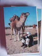 Tunesië Tunésie With Camels - Tunesië