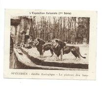 Chromo Exposition Coloniale 1931 ZOO Lions  Pub: Vache Qui Rit Spécimen Bien 76 X 58 Mm - Kaufmanns- Und Zigarettenbilder