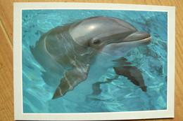 CP - Dauphin - Tursiops Truncatus - Dolphins