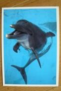 CP - Dauphin - Delfini