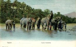 Ceylon Elephants (000464) - Sri Lanka (Ceylon)