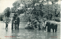 Ceylon Elephants(000468) - Sri Lanka (Ceylon)