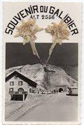Hautes Alpes - Col Du Galibier - Souvenir - Edelweiss - Cpsm - France