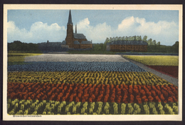 Nederland 1947, Bloembollenvelden, Ingekleurd, Gelopen - Bloemen