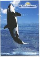 Orque (cétacéa Dauphin) Saut - Antibes : Marineland - Dauphins