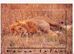 CARTOLINA KENYA - AFRICA - LEONE DORMIENTE - LION SLEEPING - Leoni