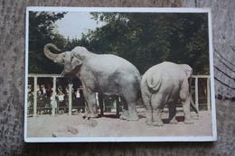 Elephant - KIEV ZOO -  Old Soviet PC 1968 - Elefanti