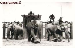AYUTTHAYA THAILANDE SIAM OLD CARD PHOTO KING PROCESSION ?  FETE DU ROI ? ELEPHANT THAILAND ASIE - Thaïlande