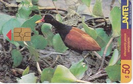 Nº 119 TARJETA DE URUGUAY DE UN GALLITO DE AGUA (BIRD-PAJARO)  (CHIP G4 NEGRO) - Uruguay