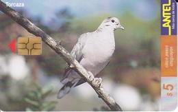 Nº 124 TARJETA DE URUGUAY DE UNA TORCAZA  (BIRD-PAJARO)  (CHIP G4 NEGRO) - Uruguay
