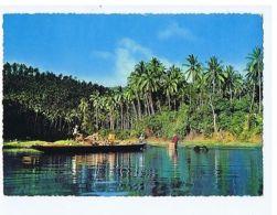 PHILIPPINES - COCONUT HARVEST IN LAGUNA - EDIT BOOK STORE MANILA 1960s ( 1615 ) - Cartes Postales