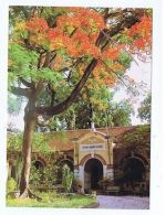 VIETNAM - HO CHI MINH CITY - MARIE CURIE SCHOOL - PHOTO LIKSIN - 1970s ( 1680 ) - Cartes Postales