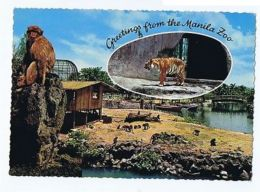 PHILIPPINES - THE MANILA ZOO - EDIT BOOK STORE MANILA 1960s ( 1624 ) - Cartes Postales