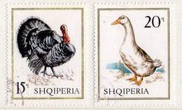 PIA - ALBANIA - 1967 : Animali Da Cortile - (Yv  1036-43) - Gallinacées & Faisans