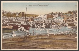 Gulls Excitement, St Ives, Cornwall, C.1930s - Dennis Aqua-Tone Postcard - St.Ives