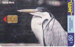 Nº 153 TARJETA DE URUGUAY DE ANTEL DE UNA GARZA MORA (PAJARO-BIRD)  (CHIP G4 NEGRO) - Uruguay