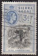 199 Sierra Leone 1956 Rice Harvesting Used - Sierra Leone (1961-...)