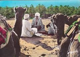 Afrique > Algérie > Scènes & Types Chameliers Dans L'oasis - Scènes & Types
