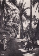 Afrique > Tunisie Tozeur  Dans L'oasis Collection Artistique D'afrique - Túnez