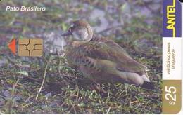Nº 209 TARJETA DE URUGUAY DE ANTEL DE UN PATO BRASILERO (PAJARO-BIRD) - Uruguay