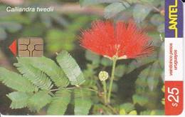 Nº 210 TARJETA DE URUGUAY DE ANTEL DE UN PLUMERILLO ROJO (FLOR-FLOWER) - Uruguay