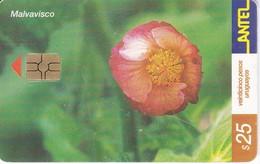 Nº 226 TARJETA DE URUGUAY DE LA MALVAVISCO (FLOWER-FLOR) (CHIP G5 ROJO) - Uruguay