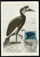 Congo - Carte Maximum 1963 - Oiseau - République Du Congo (1960-64)