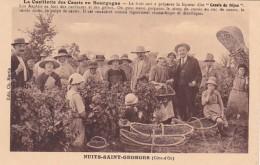 27979Nuits Saint Georges, La Cueillette Des Cassis En Bourgogne - Vignes