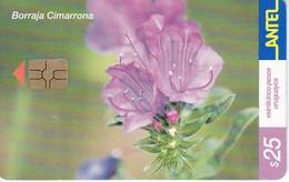Nº 235a TARJETA DE URUGUAY DE UNA BORRAJA CIMARRONA DEL 05/2002 (FLOR-FLOWER) - Uruguay