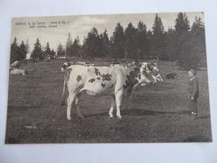 SUISSE  Fidèles  à  La  Terre  -  Vaches - Elevage