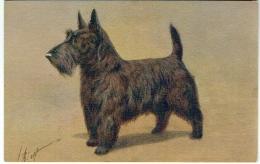 Illustrateur : Rivst. Chien. Scotch Terrier - Terrier Ecossais. - Illustratoren & Fotografen
