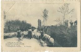 Cartolina Roma Campagna Romana  Viaggiata 1917 - Andere