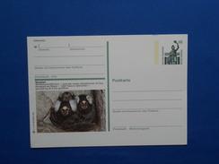 Postal Stationery,  Aap, Monkey - Apen