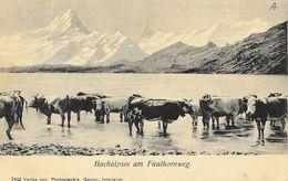 Bachalpsee Am Faulhornweg - Photo Gabler - Carte Dos Simple, Non Circulée - BE Berne