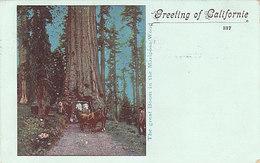 Greetings Of California - The Great Boom In The Mariposa-Wood - 1900    (A-41-160625) - Etats-Unis