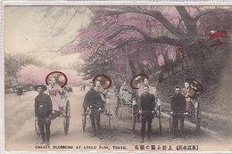 Tokyo - Cherry Blossoms At Uyeno Park - 1909   (A-41-160625) - Yémen
