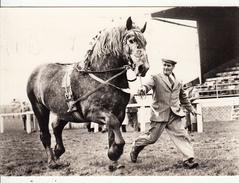 Cheval - PERCHERON  élevage Anglais - Paarden