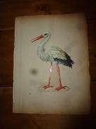Année 1889 :Page De  Chromo Découpi ( GRANDE CIGOGNE  Hauteur Du Sujet = 21 Cm) ,   Dimension Du Support = 34cm X 25cm - Animals