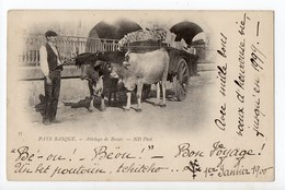 BAYONNE - 64 - PAYS BASQUE - Attelage De Boeufs 1900... - Achat Immédiat - Bayonne