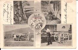 TOGGENBURG LANDWIRTSCHAFT 1906  Spinnrad Melken Kuh Dängeln Heimkehr Käserei  6/205 - Autres